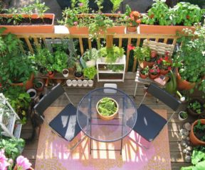 Go Green with Urban Gardening