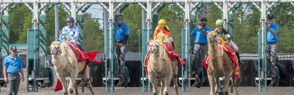 Exotic Animal Race Day  at Emerald Downs