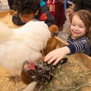 A girl pets a chicken at an indoor petting zoo.