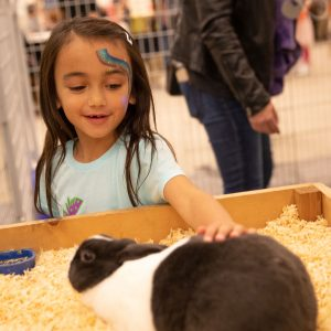 A girl pets a bunny at an indoor petting zoo.