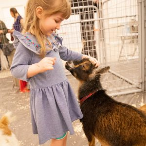 A girl pets a goat at an indoor petting zoo.