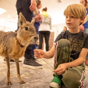 A boy pets an animal at an indoor petting zoo.